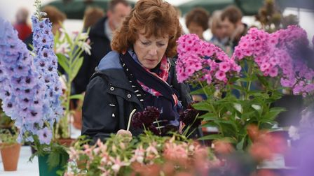 Royal Norfolk Show 2017 Flower show.Picture: Nick Butcher