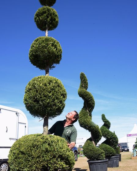 John Powles, owner of the Romantic Garden Nursery at Swannington, checks his topiary trees in the g