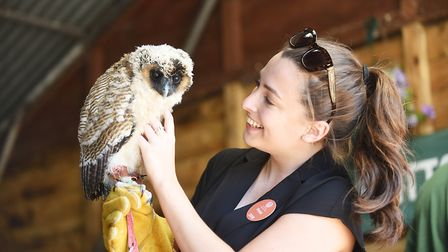 EDP reporter Ellie Pringle with Snowy the Owl from the the Fritton Own Sanctuary. Picture: Ian Burt