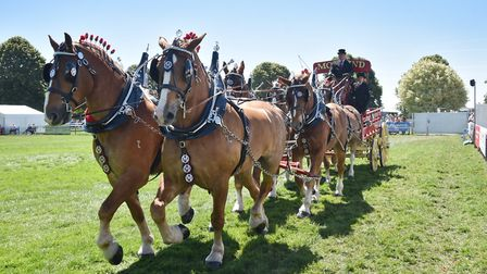 Royal Norfolk Show, 2018. Heavy Horse Turnouts.Picture: ANTONY KELLY