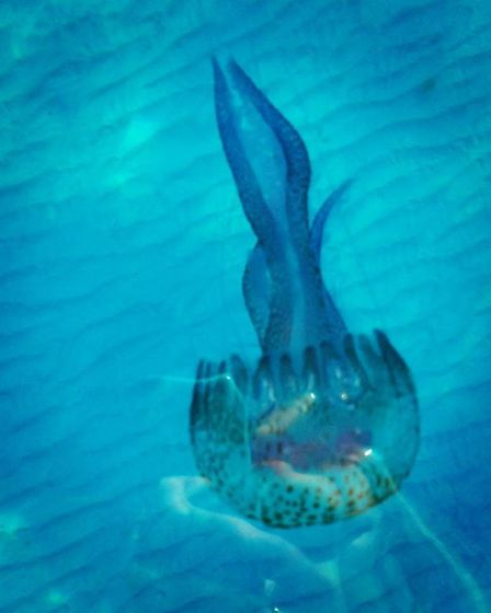 A jellyfish spotted during the adventure. Pic: Soller To Soller.