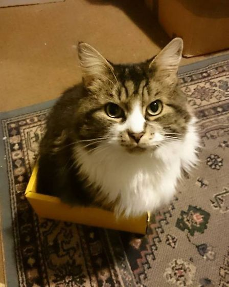Have you seen missing Cecil? (Image: Lost & Found Cats Norwich)