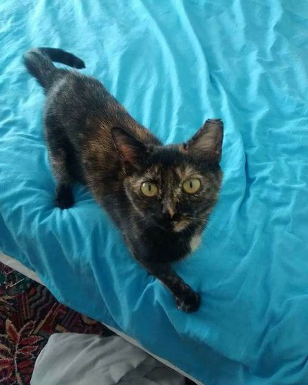 Have you seen missing Filomena? (Image: Lost & Found Cats Norwich)