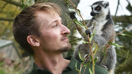 Banham Zoo animal keeper Lucas Atkinson with one of their Lemurs. Picture: Antony Kelly
