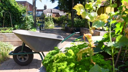 The Grapes Hill Community Garden, one of the locations shown to Anglia in Bloom judges during a tour