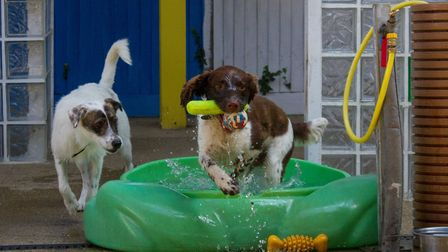 Read the five top tips on how to keep dogs cool. Picture: Dogs Trust