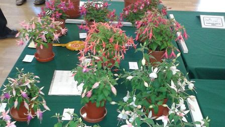 The Mid Norfolk Fuchsia and Plant Lovers Society are hosting a one day event at Toftwood village hal