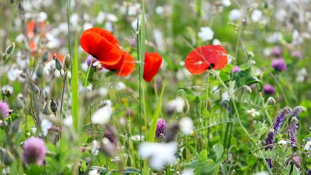 A scheme which pays farmers for delivering wildlife results on their land has won a £540,000 Defra f