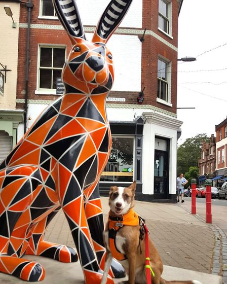 Lola, a Podenco owned by Charli Vince, visits the GoGoHare Tessellation.Photo: Charli Vince