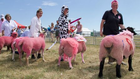 The Wayland Show held a Pink Sheep class to raise money for women's cancer charities. Some compitors