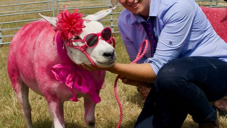 The Wayland Show held a Pink Sheep class to raise money for women's cancer charities. Picture: Tom T