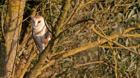 A bat and barn owl evening event is taking place at the Welney Wetland centre Picture: Ricky Cone