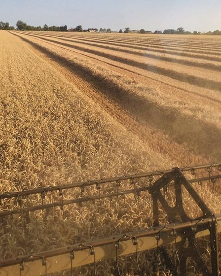 Farming scenes from Norfolk Day. A combine driver's view of wheat being harvested. Picture: Frontier