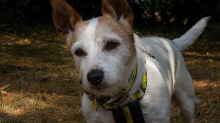 Stella T is looking for a new home. Picture: Dogs Trust