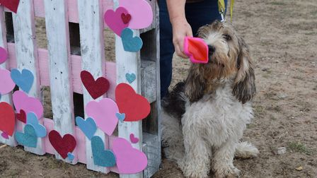 A Dogs? Breakfast on the beach - as the RSPB invited local dog owners to Winterton-on-sea beach for