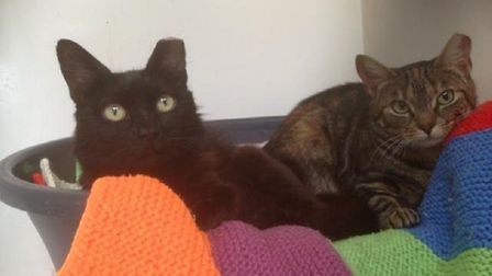 Meggie and Aggie. Photo: RSPCA East Norfolk
