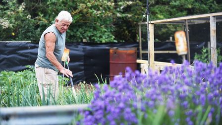 Mick Smith working on his allotment in Hunstanton during the Anglia in Bloom judges visit in July. P