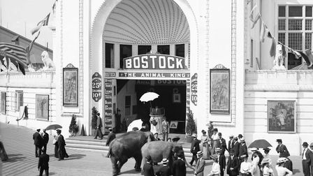 A photograph from about 1905 of Bostock's Animal Arena in the Greater Dreamland amusement park on Co