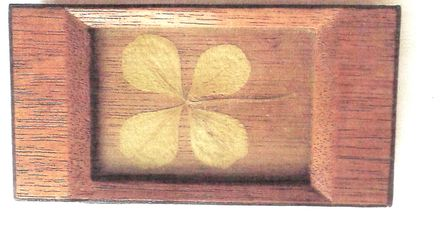 Long-lasting luck: a four-leaf clover picked in 1945 on the day the war ended, and carefully preserv