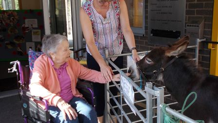 Residents at Thomas Tawell House in Norwich meet the visiting miniature donkeys. Photo: NNAB