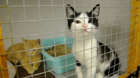 A resident of the North Norfolk Cats Lifeline Trust, whose Sheringwood home is under threat of closu