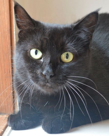 Cookie is also looking for a home. Photo: RSPCA East Norfolk Branch