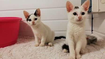 Twister and Calippo. Photo: RSPCA East Norfolk