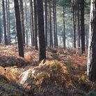 Autumn scenes in Fritton Woods and Bayfield Hall