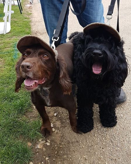 Owners (and dogs) were urged to get their thinking caps on for the Fun Dog Show Quiz. Pic: All About