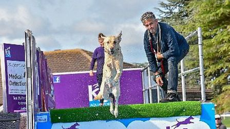 All About Dogs Show 2018 at the Norfolk Showground. Photo: Nick Christie