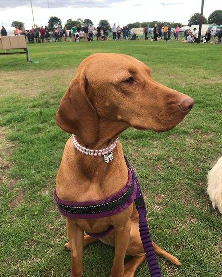 Arla waiting in line during one of the competitions at the All About Dogs Show 2018 at the Norfolk S