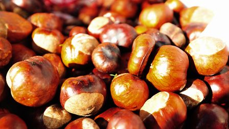 There have been warnings over the dangers of conkers to dogs. Picture Nick Butcher.