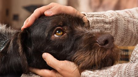 Interacting with dogs can bring a range of health benefits.Picture: Getty Images