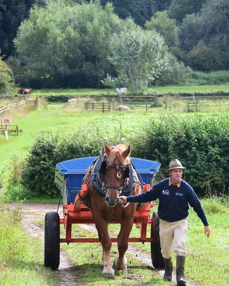 The Gressenhall Farm and Workhouse heavy horses experience day. Farm manager, Richard Dalton, with T