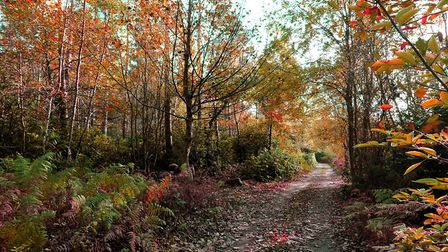 Autumn in Racecourse Plantation in Thorpe St Andrew.Photo by Simon Finlay