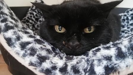 Ant needs a home. Photo: RSPCA East Norfolk