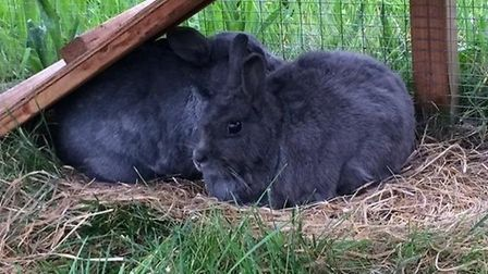 Jayne and Michelle need a home. Photo: RSPCA East Norfolk