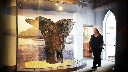 The central stump on display at Lynn Museum Picture: Ian Burt