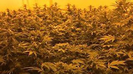 A cannabis farm has been found in Eaton, Norwich. Picture: Norfolk Police