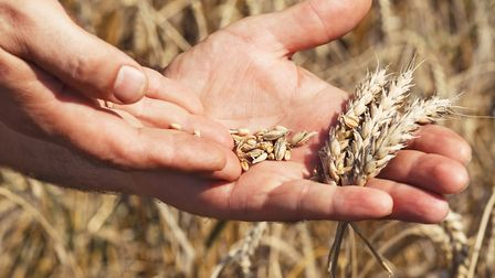 Cereal grains. Picture: Getty Images/iStockphoto