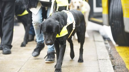 Guide dogs help more than 4,500 people in the UK. Picture: Ian Burt