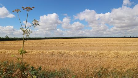 The site of a proposed 10,000 home new garden town in the Norfolk countryside near North Elmham, Pho