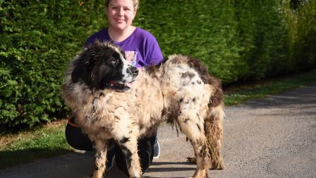 Lauren Nicholls, groomer at the Dogotel at Hillington, with one of the dogs, believed to be a newfou