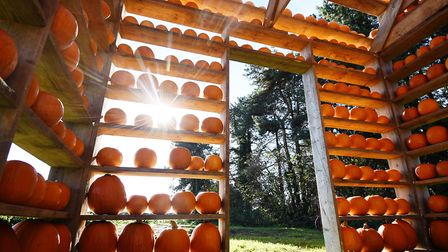 The Pumpkin House, Thursford. Picture: ANTONY KELLY