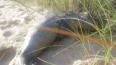 A baby seal was 'brutally' killed by two dogs on Great Yarmouth beach on Monday. Picture: Tasha Walk