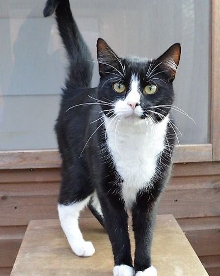 Kevin needs a home. Photo: RSPCA East Norfolk