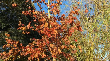Autumn glories linger on – but the gateway to winter is open