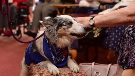 Mia the Therapy Dog visits Ford Place Care Home during just one of the activites organised by the ho
