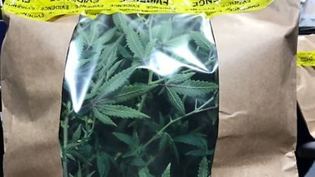 Cannabis found in a cupboard in Earlham. Photo: Norwich police