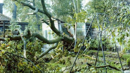 A shot of damage from the Great Storm on 1987. This shot was taken in Spike Millington's back garden